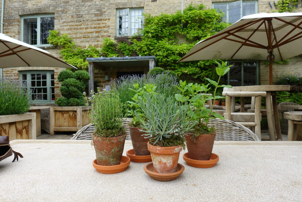 Fresh herbs outside The Wild Rabbit